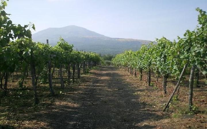 mt-vesuvius_wine